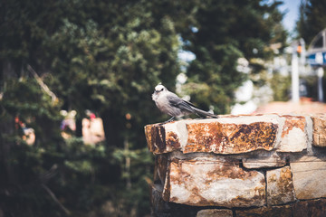 A bird sitting on a brick wall in the mountains.