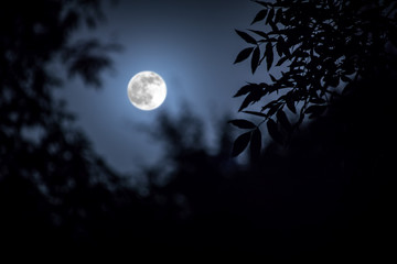 Night landscape of sky and super moon with bright moonlight behind silhouette of tree branch. Serenity nature background. Outdoors at nighttime.