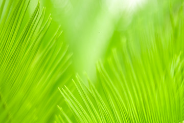 Green nature background,select focus.