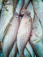 fresh fish at a thai daily market