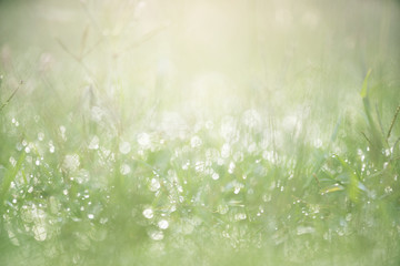 Green grass with dew background with sunlight Wall mural