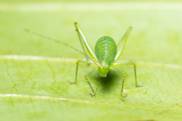 Macro grasshopper on the plant