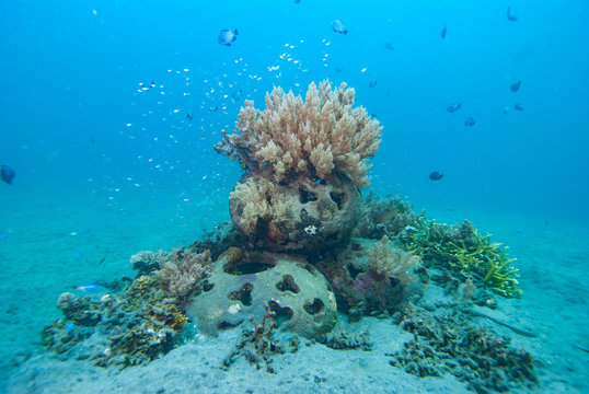 Artificial Coral Reef Underwater Bali