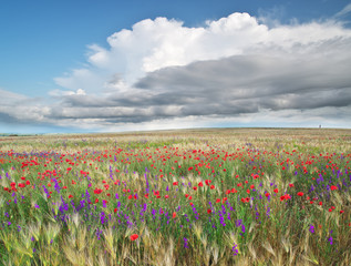 Wall Mural - Meadow of wheat and flowers