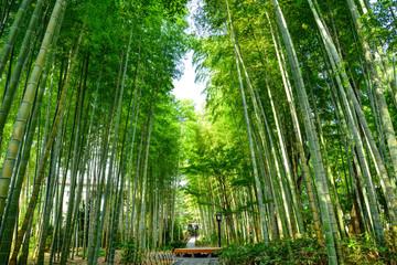 静岡県伊豆市 修善寺の「竹林の小径」 Wall mural