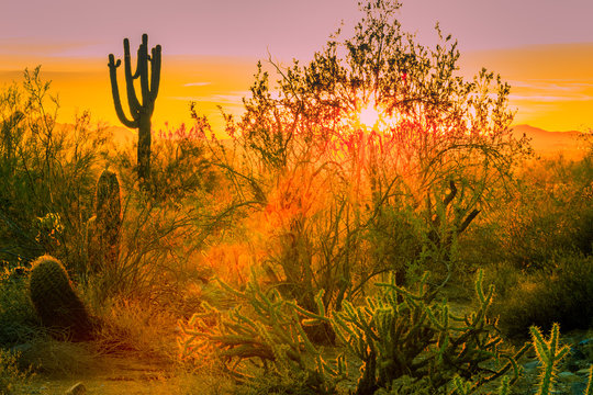 Close ups of various cactus found in the Sonoran Desert in Arizona
