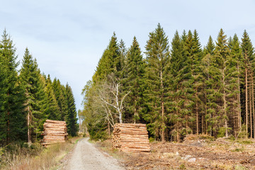 Road at a deforestation with timber pile