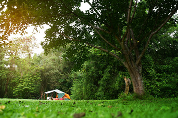nature landscape camping tent with tarp or flysheet under big tree on green grass meadow and waterfall in jungle for family vacation picnic on holiday relax travel and rainy season with warm sunlight