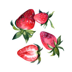 Beautiful hand painted watercolor illustration for your design.