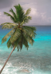 Palm tree on La Dig's island, Seychelles, before a storm