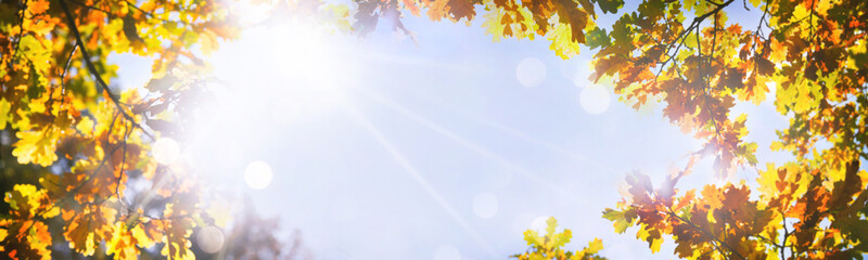 Autumnal oak leaves on the sun