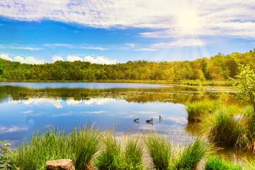 Le anatre nel lago