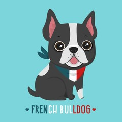 Dog breed French Bulldog. Puppy in a bandage in the colors of the French flag.