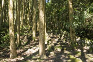 スギ林の脇の石段
