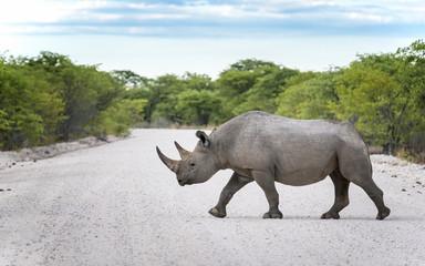 Nashorn, Etosha National Park Namibia