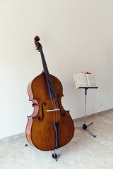 Double bass portrait
