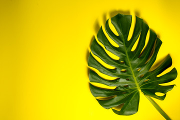 Tropical palm leaf on yellow background