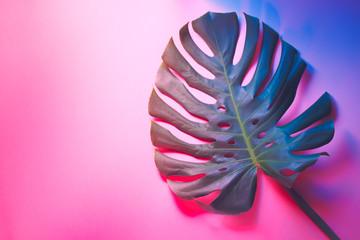 Tropical palm leaf on pastel background