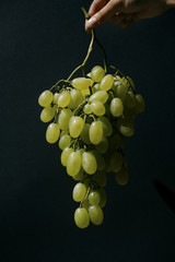 A hand holding grapes on a dark background