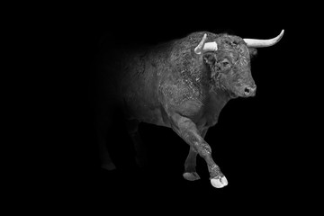 Wall Mural - taurus wildlife animal interior art collection