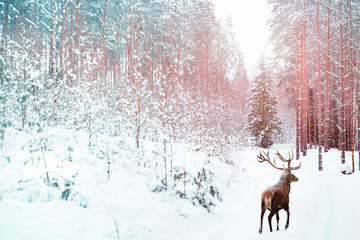 Wall Mural - Lonely noble deer against winter fairy forest. Winter Christmas holiday image. Image toned in pink and blue color.