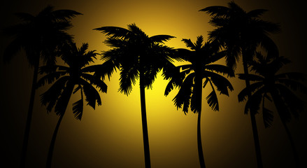 Tropical background, palm tree, sunset
