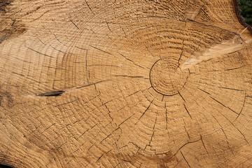 Matière bois tronc arbre texture