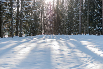 Snow-covered glade in the forest on a winter sunny day