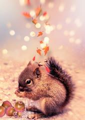 Autumn squirrel. Blur bokeh background