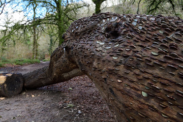 Low angle view of a tree trunk full of coins at Tarr steps in Devon