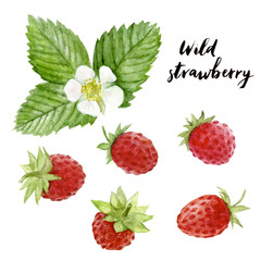 wild strawberry watercolor hand draw illustration isolated on white