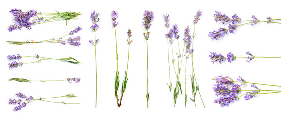 Photo sur Aluminium Lavande Set with aromatic fresh lavender on white background