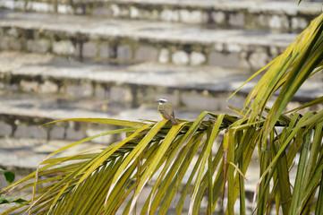bird on palm branch Puebla Mexico