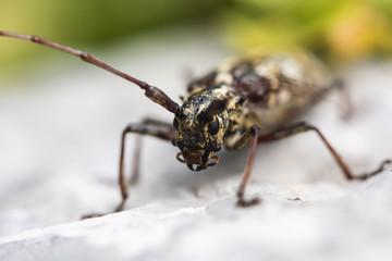 Insecte_07