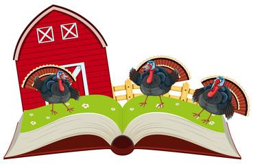 Turkey at farm open book