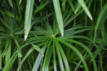 green palm plant in public park Puebla Mexico