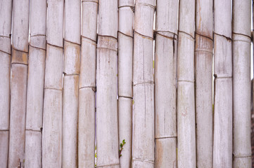 texture of dry bamboo stems