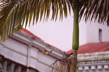 two birds and palm branches Puebla Mexico