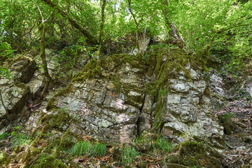 Stony rock wall in forest with overhanging foliage and green grass