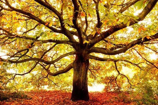 Autumn tree London, uk