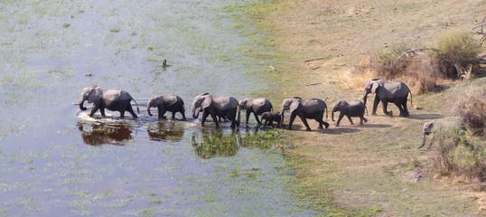 Elephant family crossing water in the Okavango delta (Botswana)