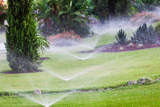 Water spray. Automatic lawn watering. Sprinkling