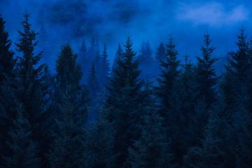 Misty carpathian spruce forest at night