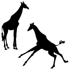 Black silhouettes of standing and running giraffes isolated on white background. Vector illustration EPS 8