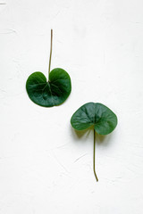 Green leaves on white concrete background, flat lay