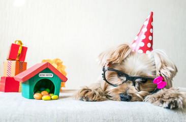 Funny cute Yorkshire Terrier (Yorkie) Dog in red party hat cap lies on table on background of festive garland and decor. Party, after party, fun, holiday background, banner. Copy space