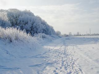 Frosty Winter Landscape. Snowy Forest