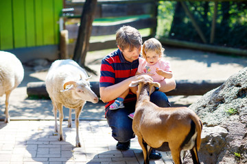 Adorable cute toddler girl and young father feeding little goats and sheeps on a kids farm. Beautiful baby child petting animals in the zoo. man and daughter together