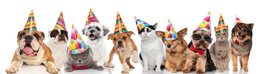 dogs and cats of different breeds wearing colorful birthday hats