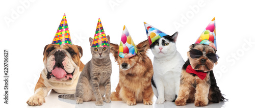 Team Of Five Cats And Dogs Ready For Birthday Party